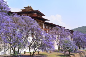 punakha, bhutan places to visit, best places to visit in punakha bhutan, rafting in punakha, Bhutan travels, Bhutan tour package.